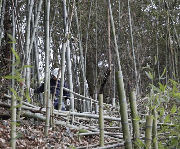 整備によって採れた竹を商品として販売
