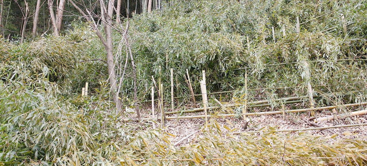 竹林被害でお困りの方