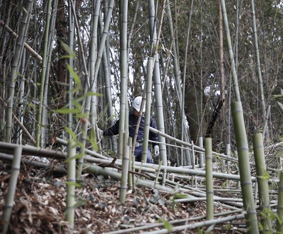 お困りの放置竹林を伐採し、地域環境の改善につなげます。