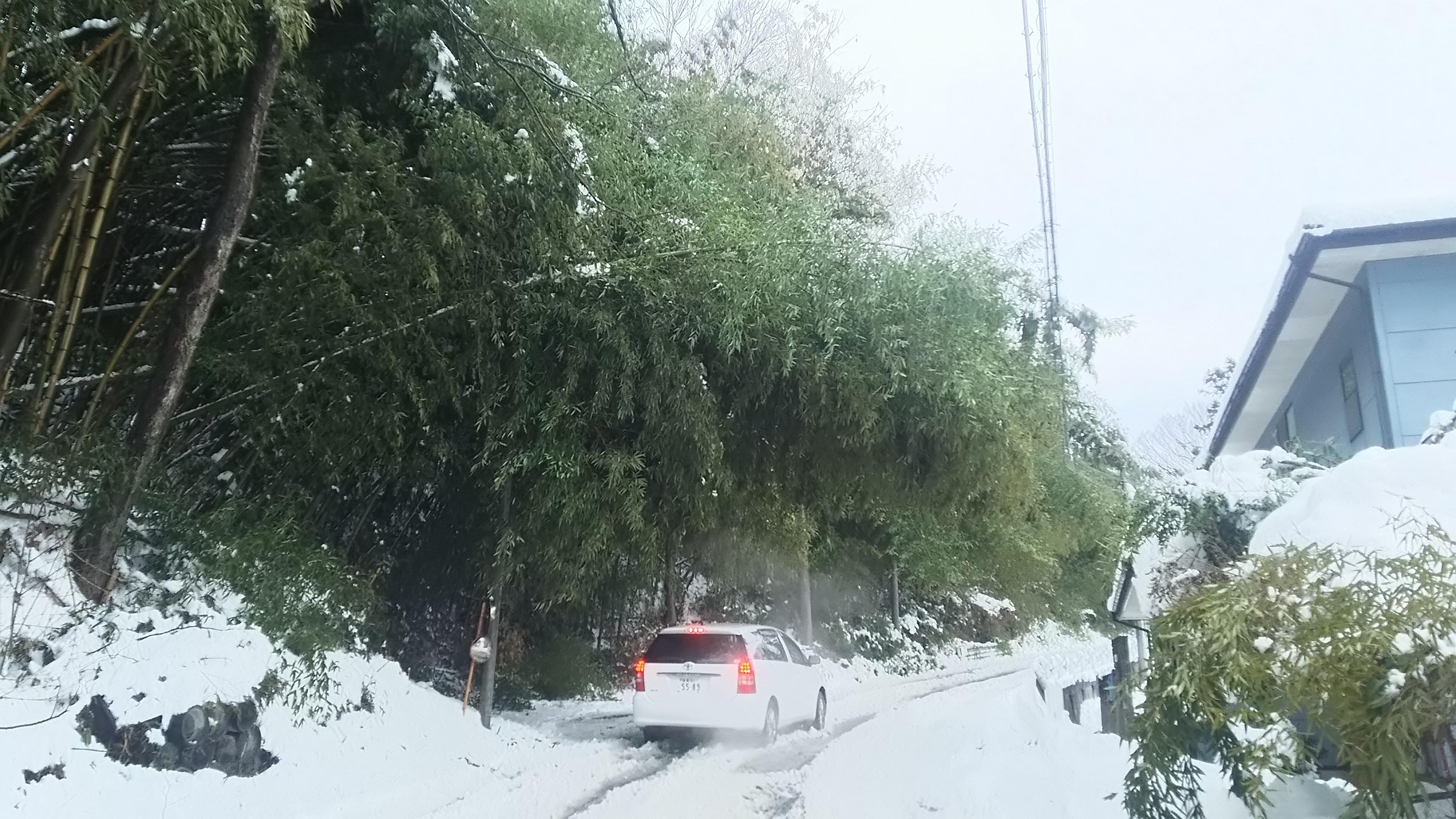竹害による日照不足・路面凍結